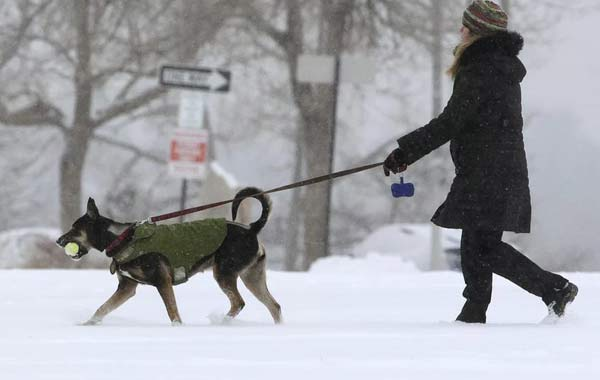 закон о выгуле собак