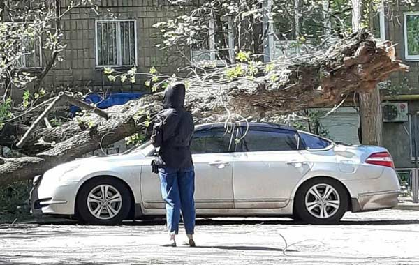 На машине царапины от веток упавшего во дворе дома дерева, кто ответит?